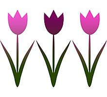 Tulips pink for stuff Photographic Print