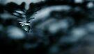 drop in darkness  by Ingrid Beddoes
