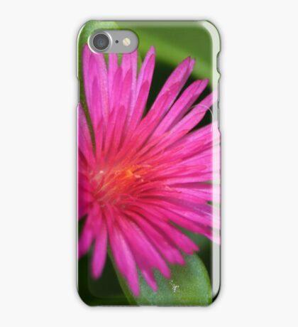 Pink Flower of Succulent Carpet Weed iPhone Case/Skin