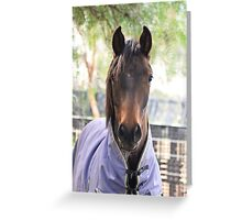 Brumby Greeting Card