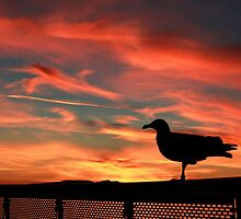 Seagull Silhouette Against a Beautiful Sunset by malcolmackenzie