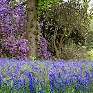 Blues & Mauves of Spring by vivsworld