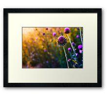 DSC_3588 Framed Print