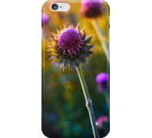 DSC_3588 iPhone Case/Skin