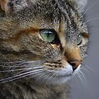 Green Eyes by Mythos57