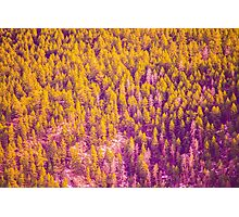 Psychedelic Pines Photographic Print