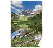 Maroon Bells Images - Canada Geese on a Summer Morning in Colorado Poster