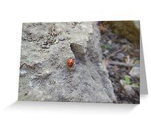 ladybug on rock Greeting Card