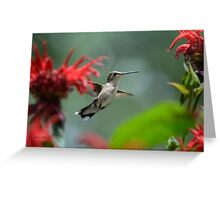 Hummingbird Flying Greeting Card