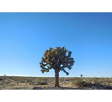 joshua tree (small) Photographic Print