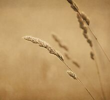 Harvest by Suzanne Harford