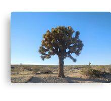 joshua tree (large) Canvas Print
