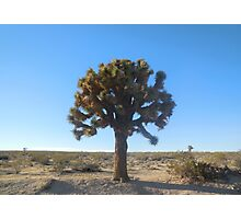 joshua tree (large) Photographic Print