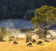 Australian Winter by Bruce Reardon