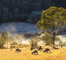 Australian Winter by Bruce Reardon