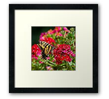 Swallowtail Butterfly Square Framed Print
