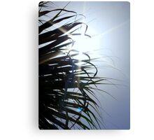Sunburst Behind Palm Tree Canvas Print