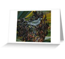 Noisy Miner Greeting Card