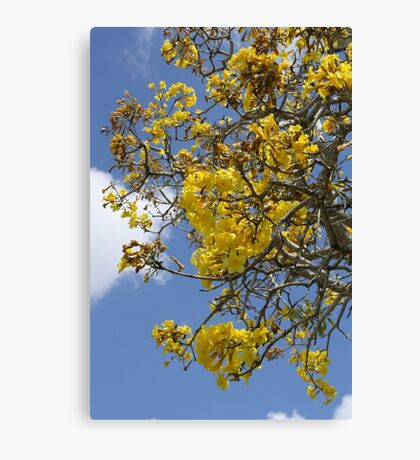 Springtime Tree with Yellow Flowers Canvas Print
