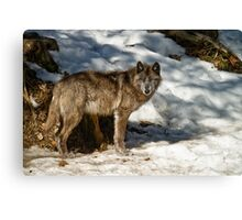 Black Wolf In Snow Canvas Print