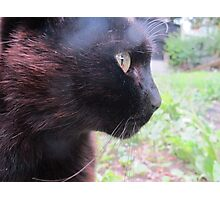 The Courageous Cat Photographic Print