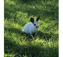 Dan the Bunny in the Grass Photographic Print
