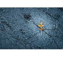 Leaf in Ice Photographic Print