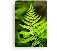 Botanical Fern Leaf Canvas Print