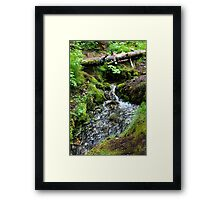 Natural Spring Framed Print
