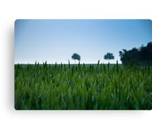 Field and Farmland Canvas Print