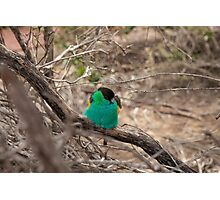 Green Parrot Photographic Print