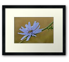Insect on a Blue Flower Framed Print