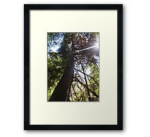 stretching tree Framed Print