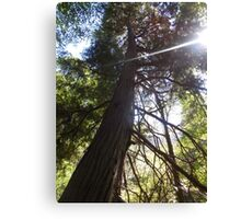 stretching tree Canvas Print