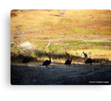 Australian emus and kangaroos at sunrise Canvas Print