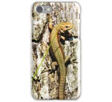 Common Lizard iPhone Case/Skin