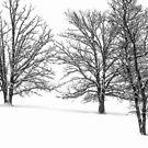 Three Trees by April Koehler