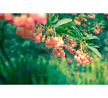 graceful flowers Photographic Print