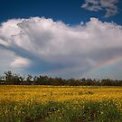Stormcloud with canola by zumi