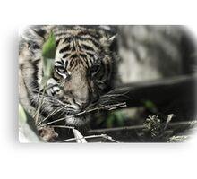 Antique Tiger  Canvas Print