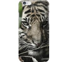 Antique Tiger  iPhone Case/Skin