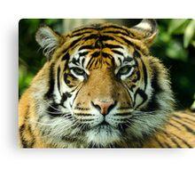 Amur Tiger Eyes Canvas Print