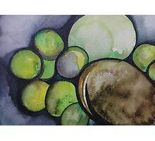 Limes and Avocado in Baja California Photographic Print