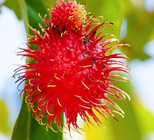 Close-up shot of a Rambutan tropical fruit in the tree by Stanciuc