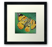 South African Butterfly Framed Print