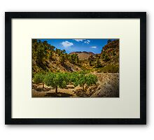 The grove in the valley Framed Print