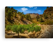 The grove in the valley Canvas Print