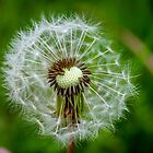 Dandelion by Mark Williams