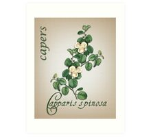 Botanical illustration of Capers Art Print