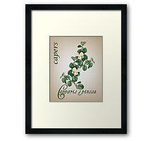 Botanical illustration of Capers Framed Print